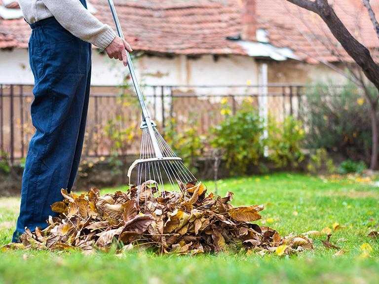 Pracownik grabi liście